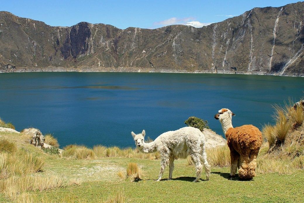 Ecuador-Lake-Lamas