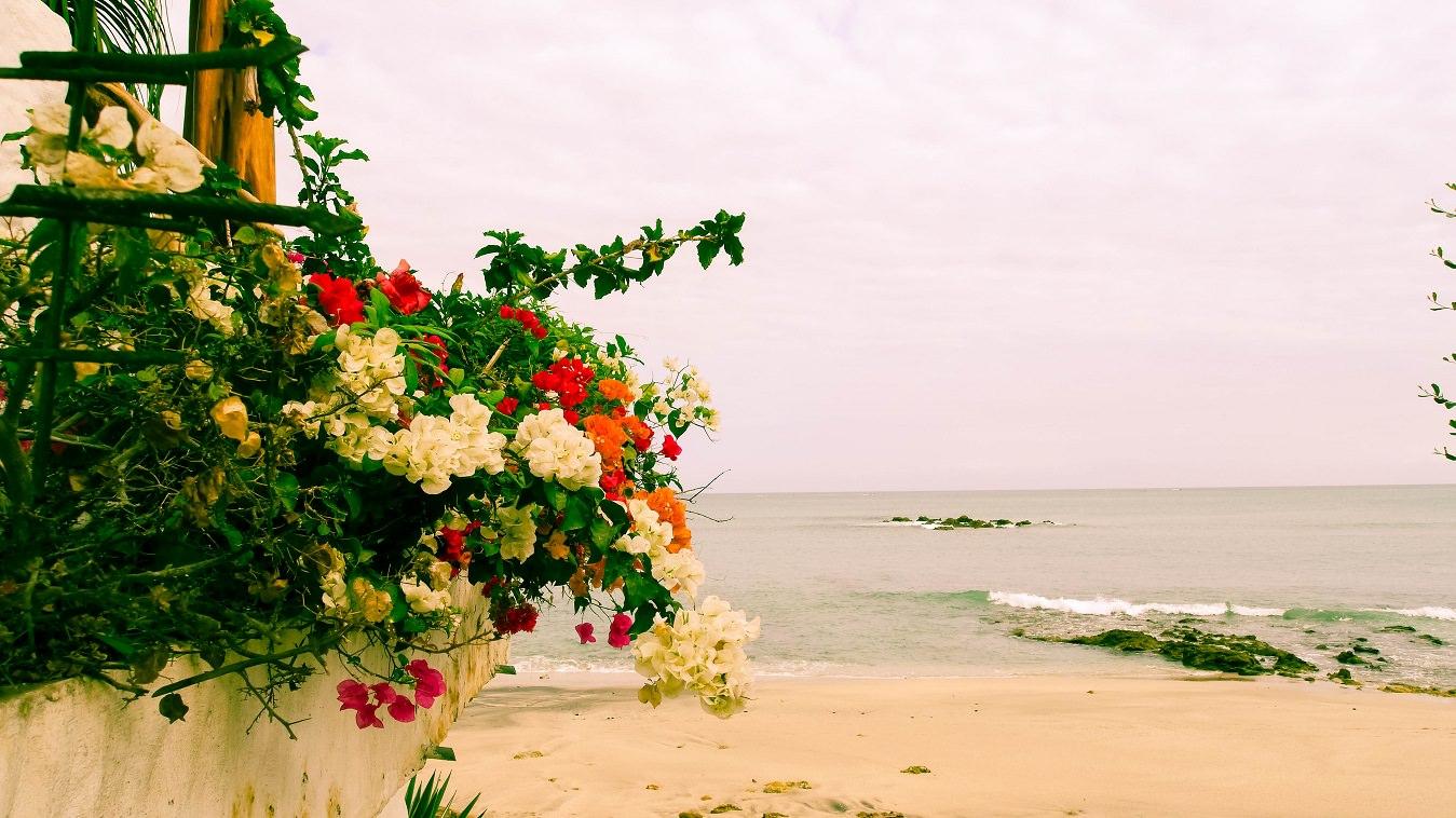 ecuador salinas flower beach